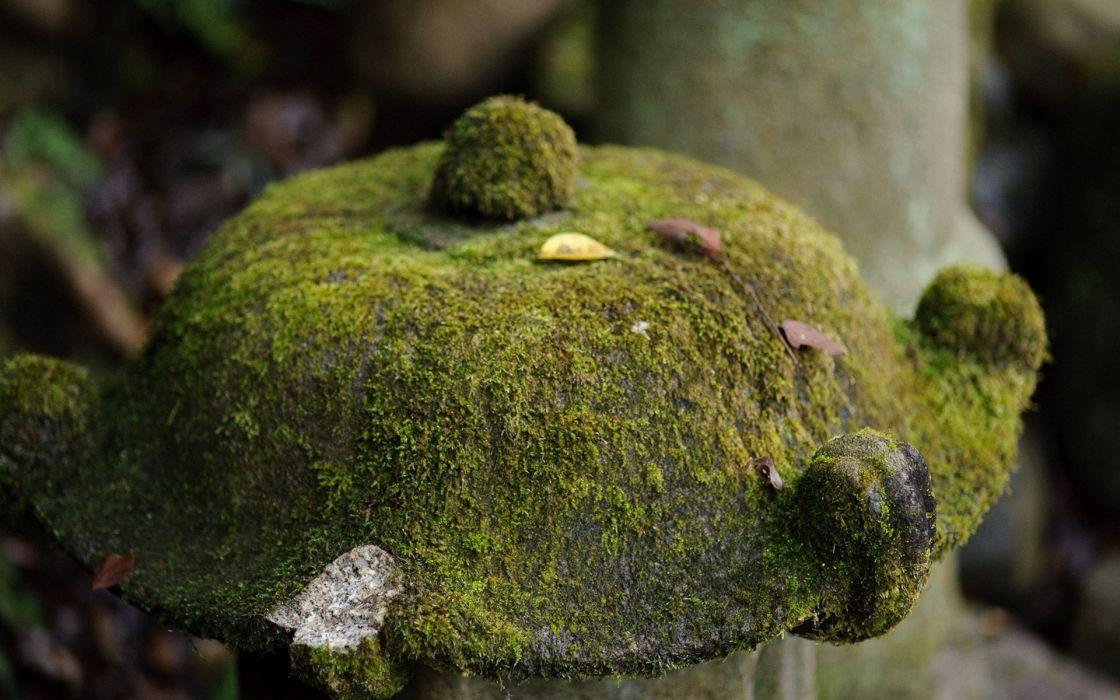 Japan moss wallpaper