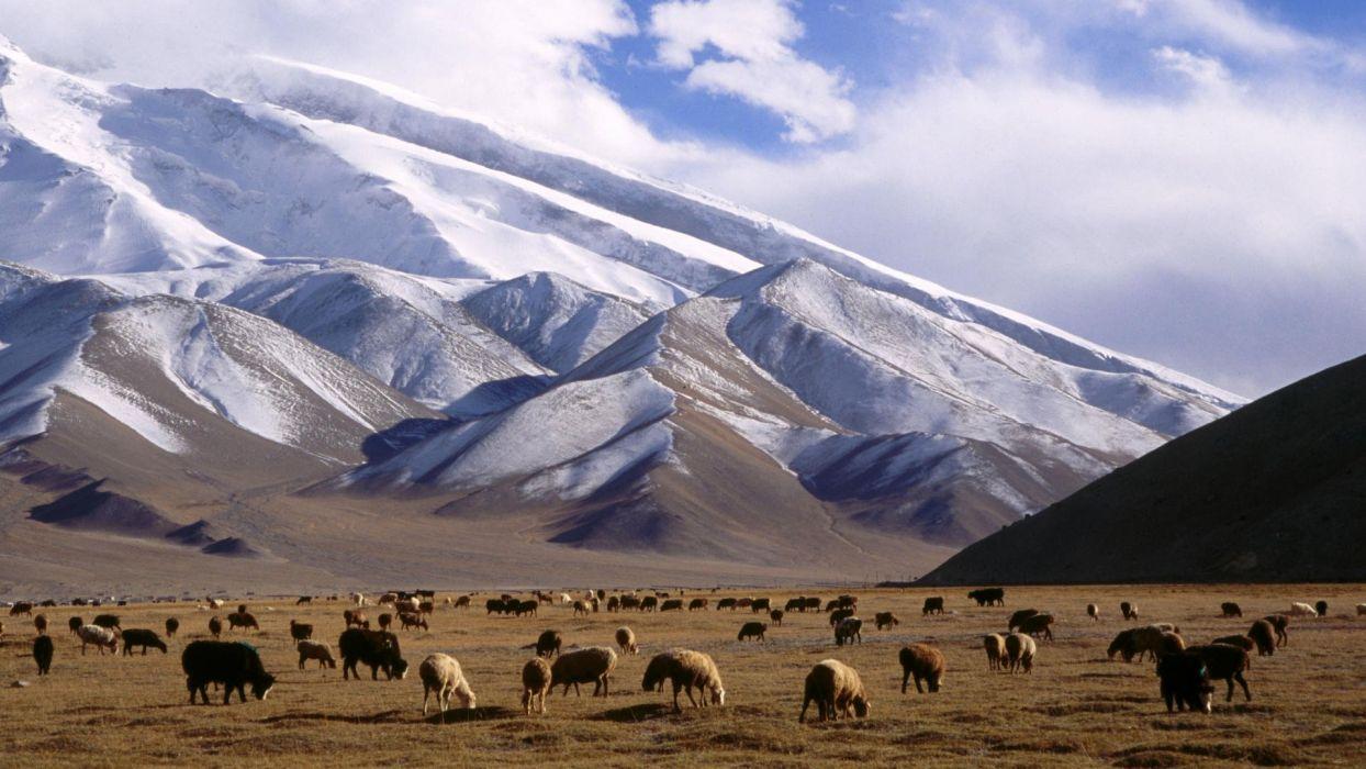 mountains China yak Grassland wallpaper