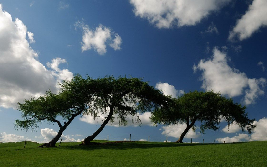 clouds landscapes trees wallpaper
