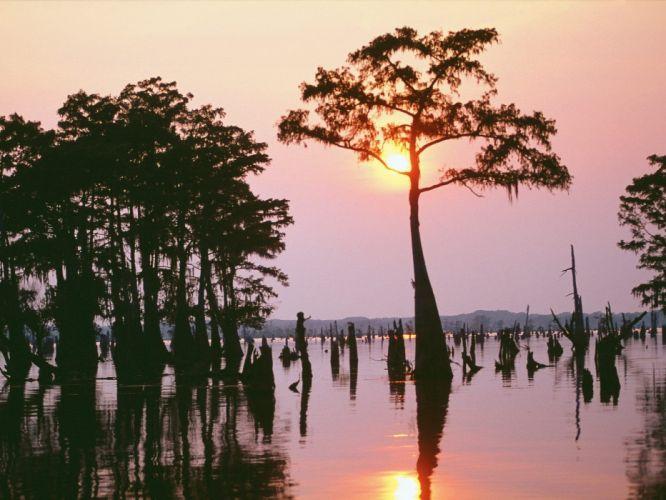 sunset trees Louisiana wallpaper