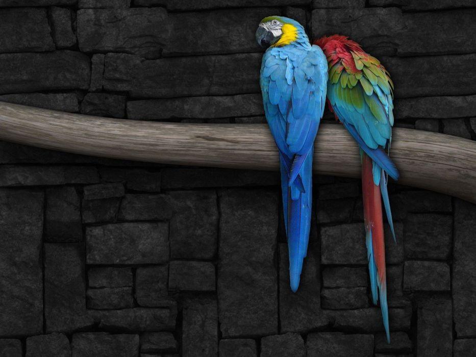 abstract birds parrots renders wallpaper