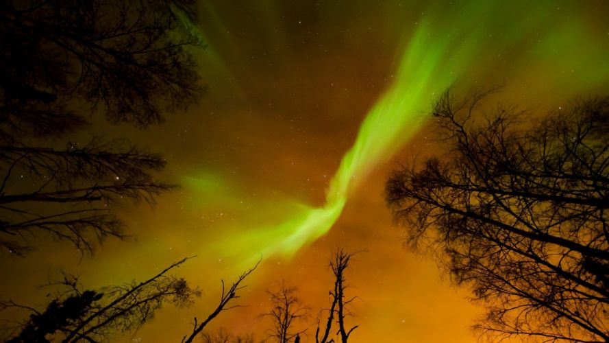 trees night lights aurora borealis northern wallpaper