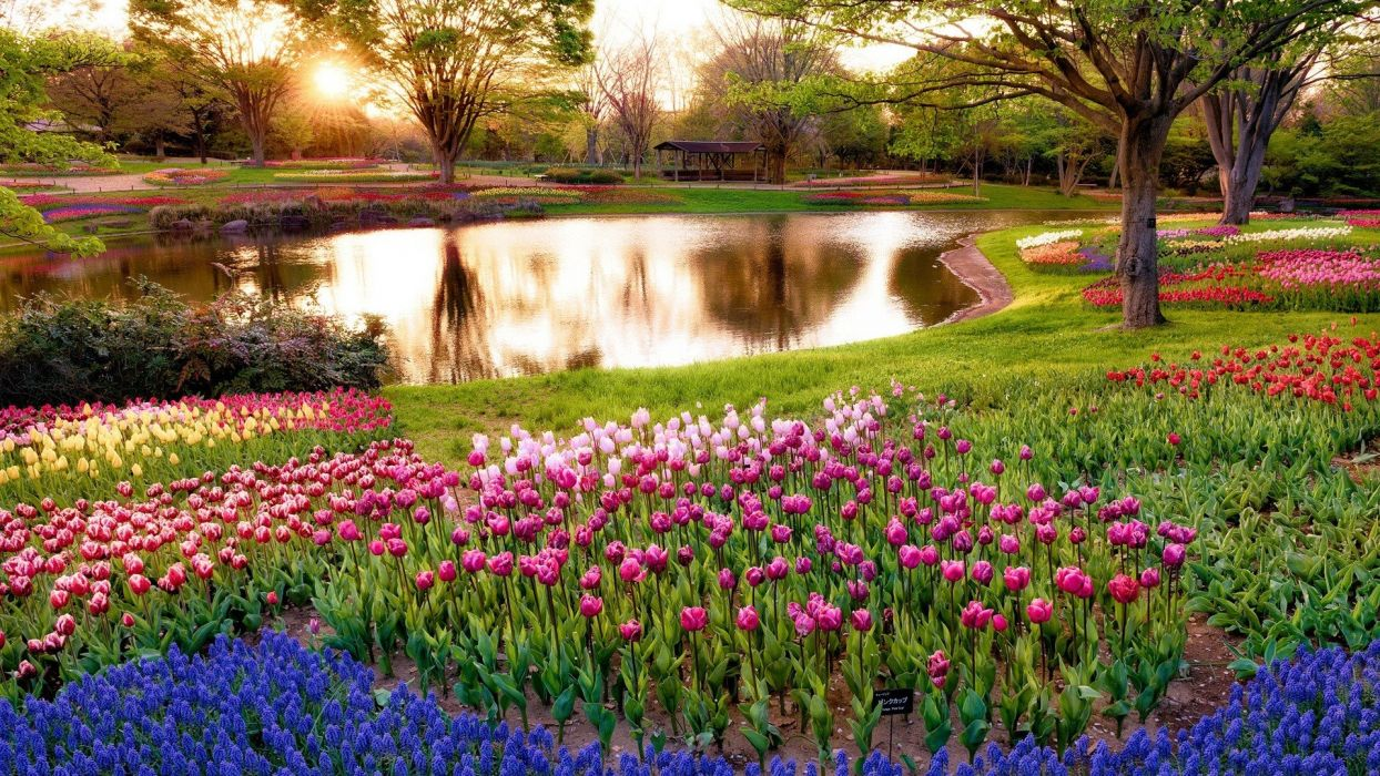 Japan sunrise landscapes nature Tokyo trees flowers morning park wallpaper