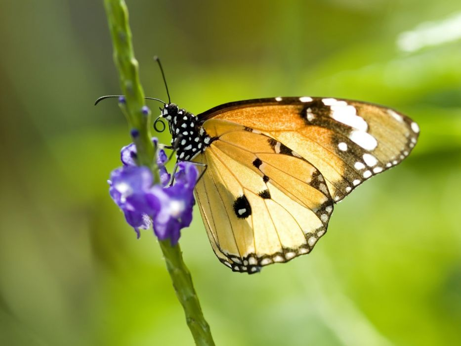 nature multicolor insects grass butterflies wallpaper