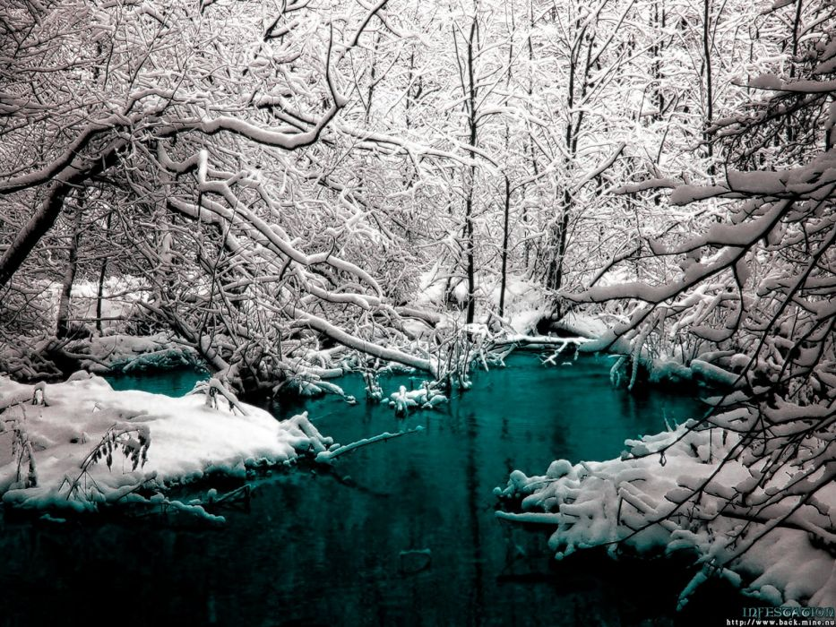 winter trees cold rivers wallpaper