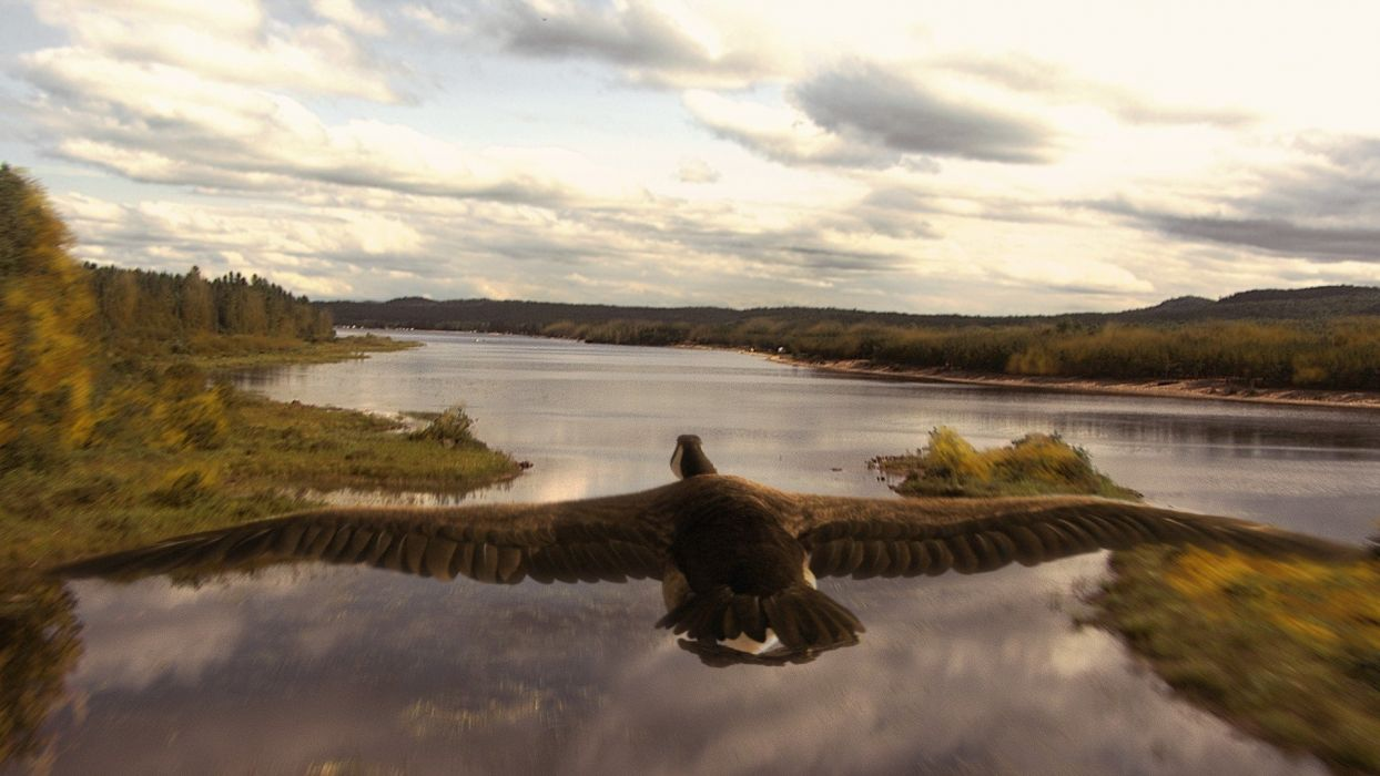 islands rivers geese wallpaper
