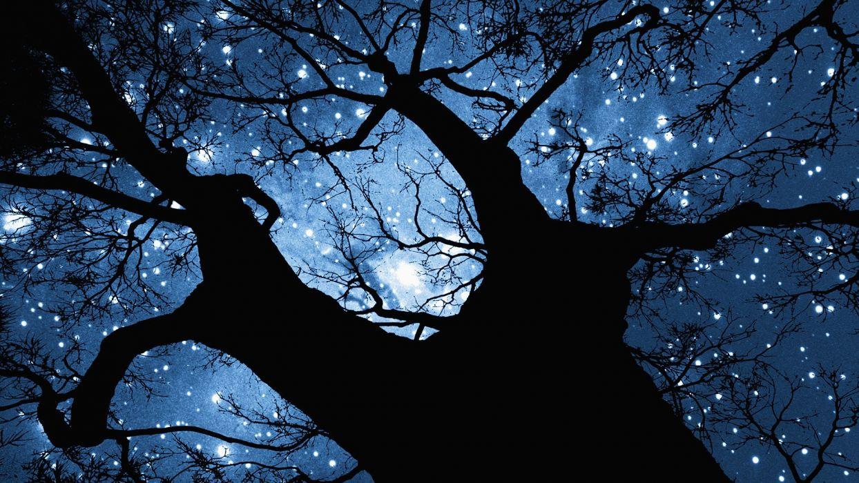 trees night stars wallpaper