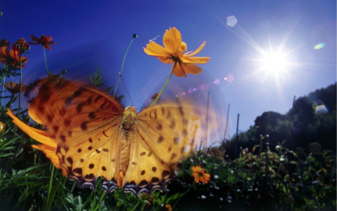 nature Sun insects butterflies wallpaper