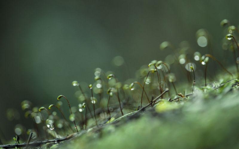 moss water drops macro Flora wallpaper