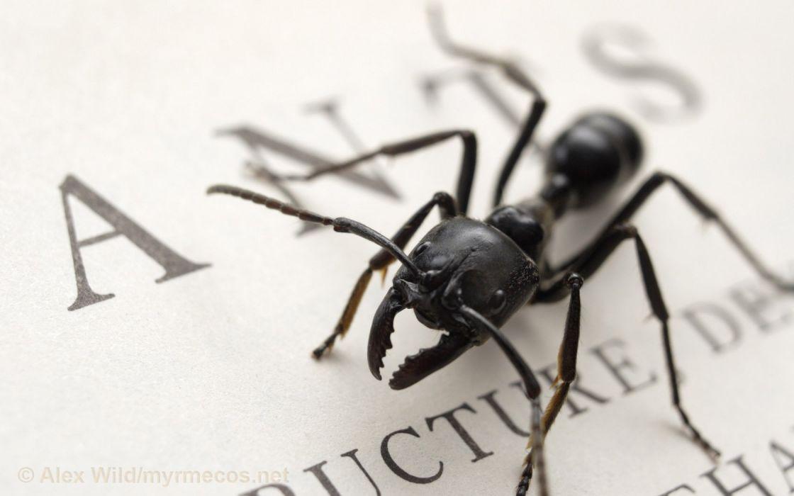 ants wallpaper