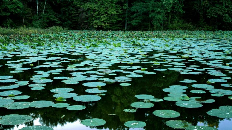 lakes lily pads Illinois wallpaper