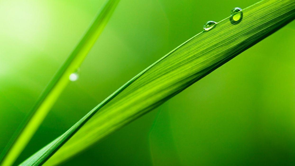 green leaves water drops macro depth of field wallpaper