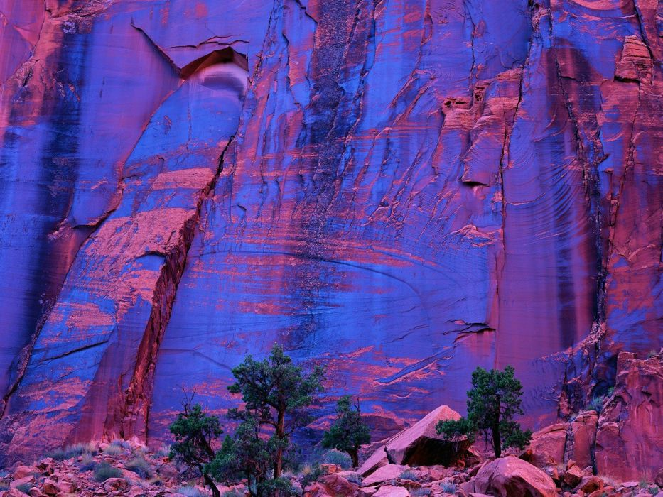 trees canyon grand Utah wallpaper