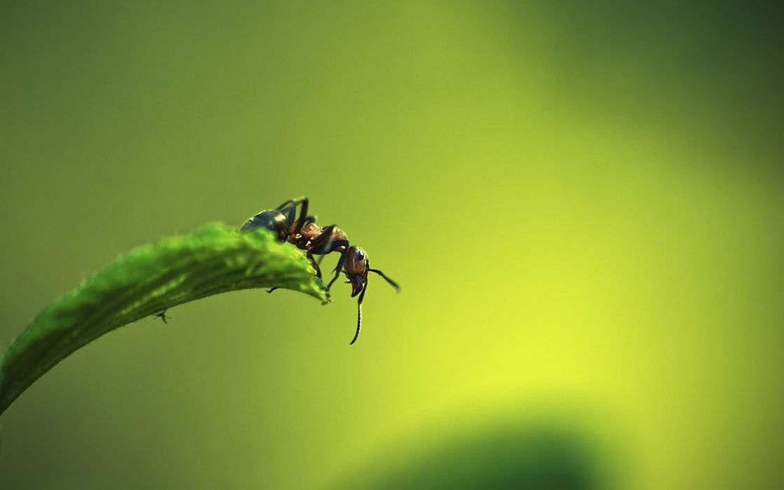 nature animals insects macro depth of field wallpaper