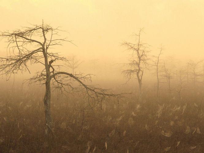 Florida morning dew National Park wallpaper