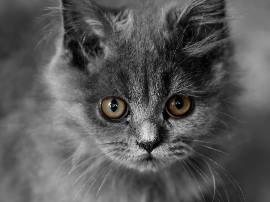 cats animals kittens selective coloring wallpaper