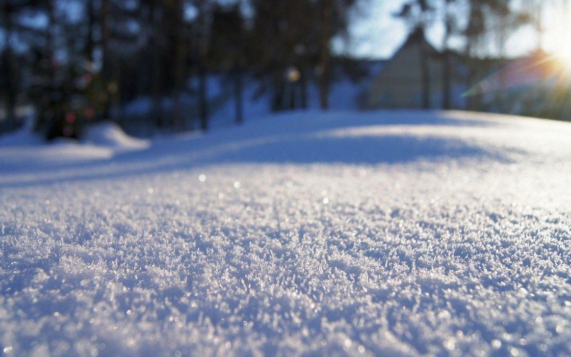 winter snow macro wallpaper