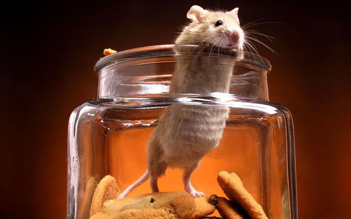 animals cookies mice jars wallpaper