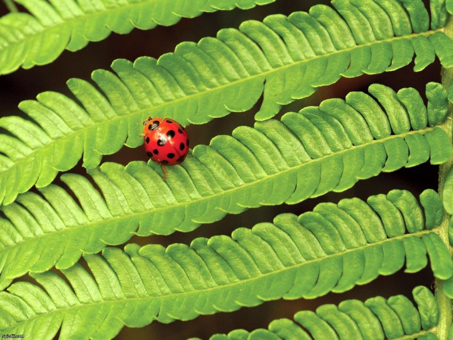nature insects leaves ferns ladybirds wallpaper