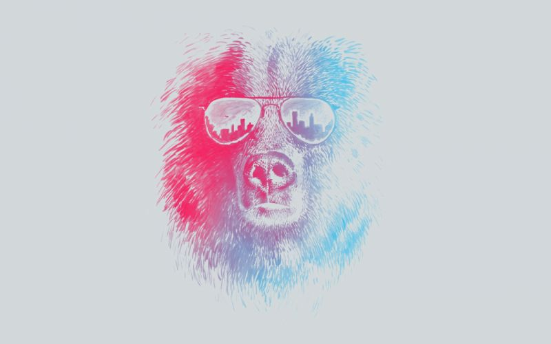 sunglasses bears wallpaper