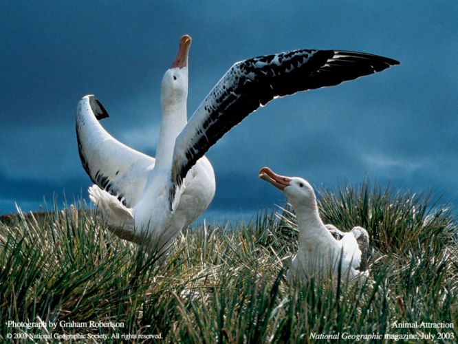 birds National Geographic wallpaper