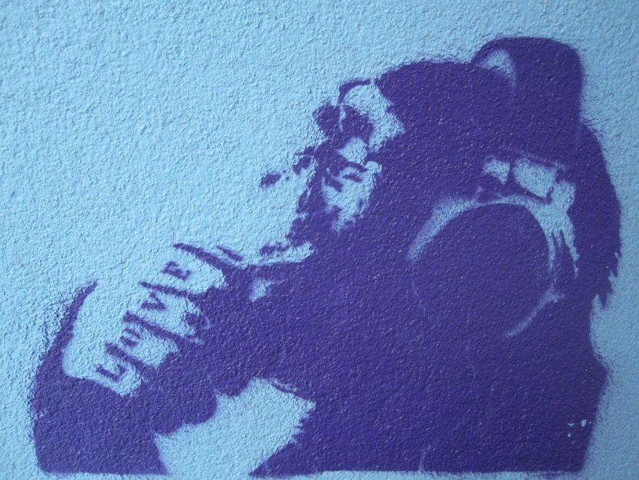 apes street art wallpaper