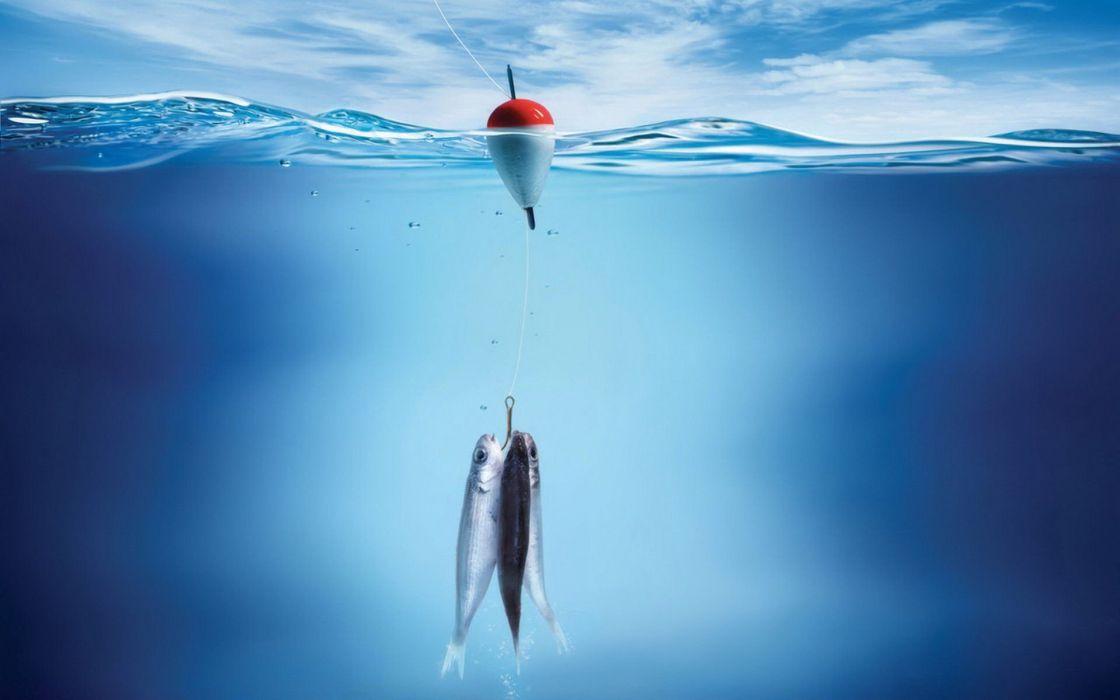 fish split-view wallpaper