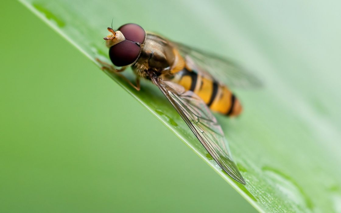 nature insects wallpaper