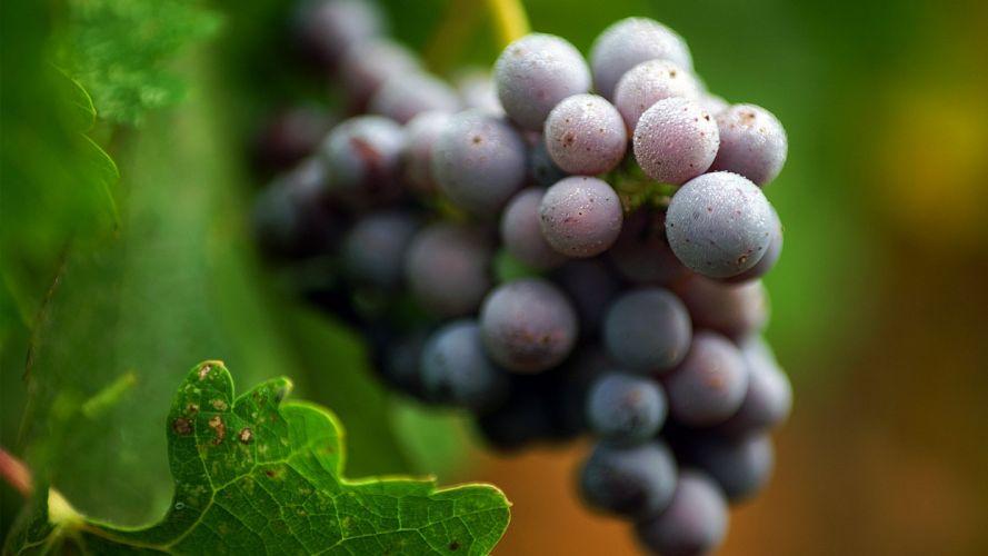 fruits grapes macro wallpaper