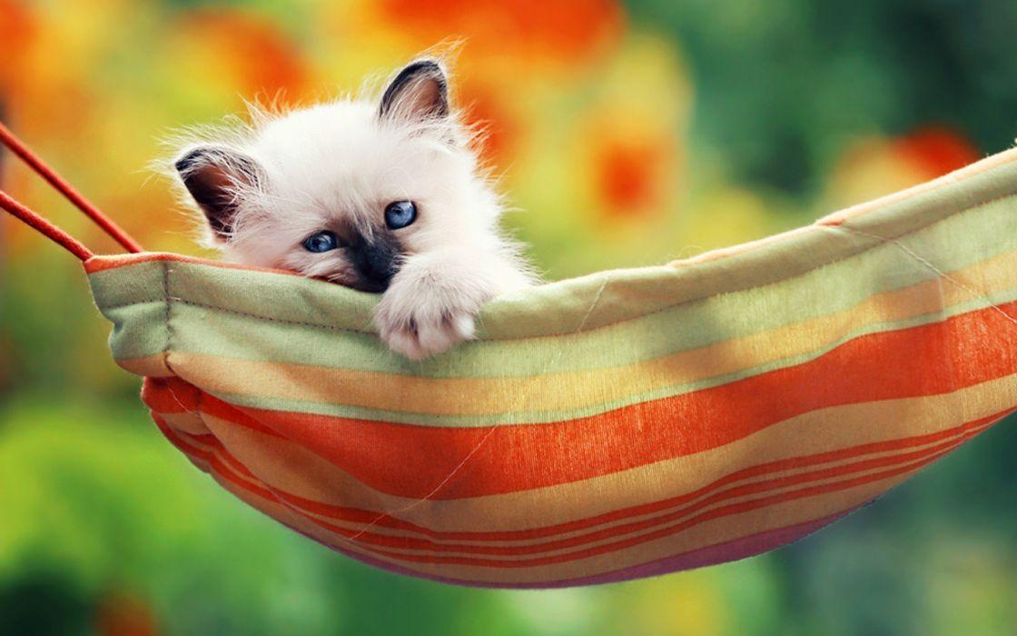 cats pets upscaled wallpaper