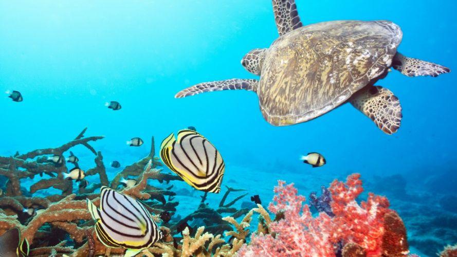 water animals fish coral sealife angel fish wallpaper