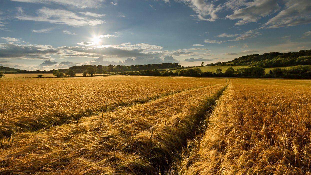 clouds nature Sun fields hills skies wallpaper