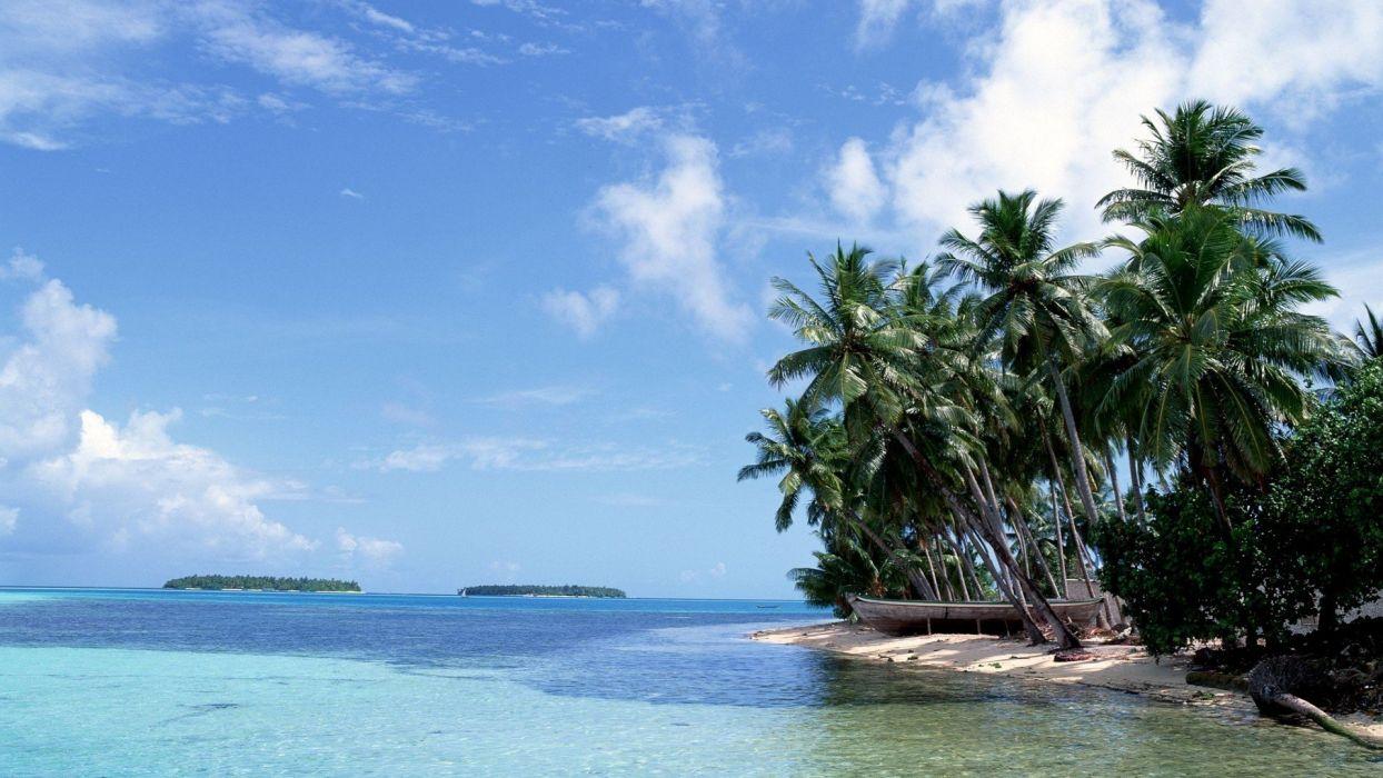 landscapes nature palm sea wallpaper
