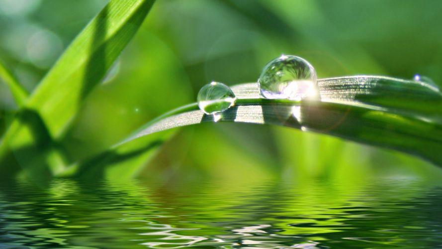 water grass water drops wallpaper