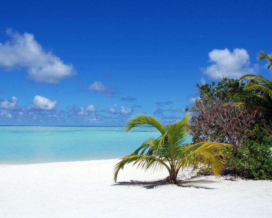 ocean Maldives palm trees blue skies beaches wallpaper