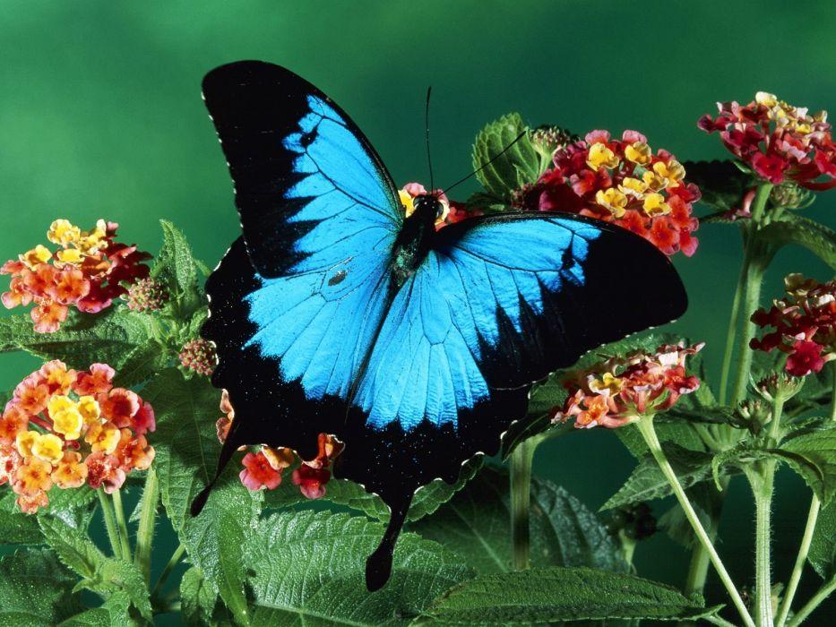 insects butterflies wallpaper