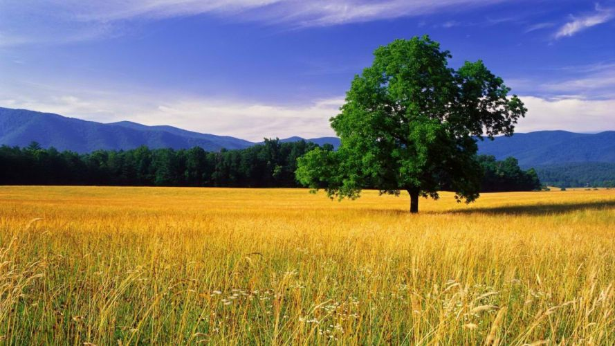 mountains Tennessee National Park oak Great Smoky Mountains wallpaper