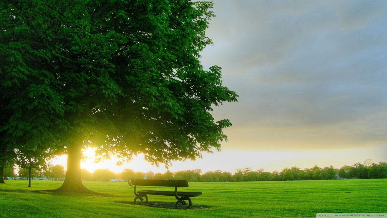 sunrise landscapes nature trees forests grass summer bench Virtual wallpaper