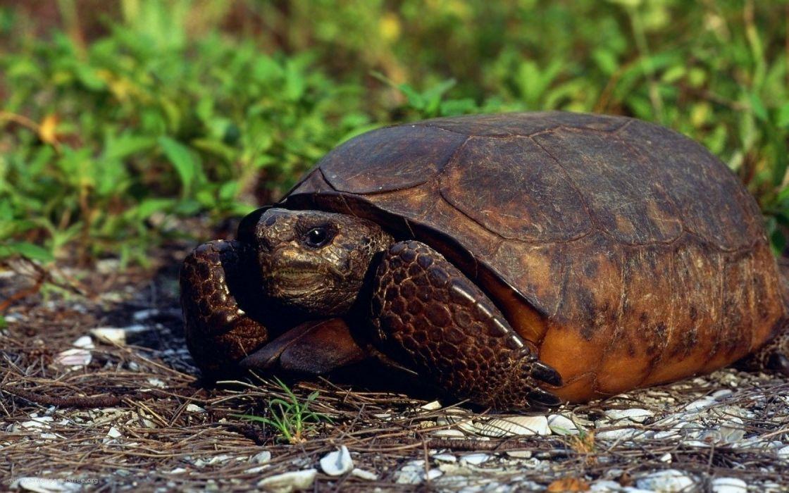 close-up animals turtles depth of field wallpaper