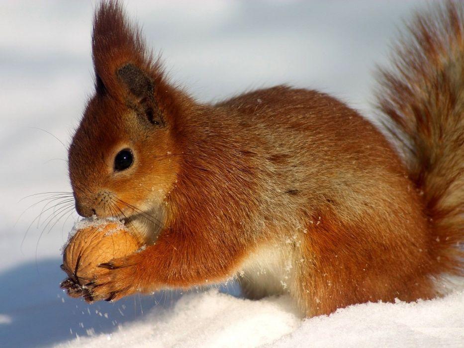 animals squirrels wallpaper