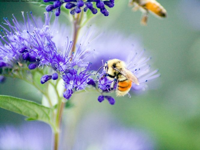 nature flowers insects plants bees wallpaper