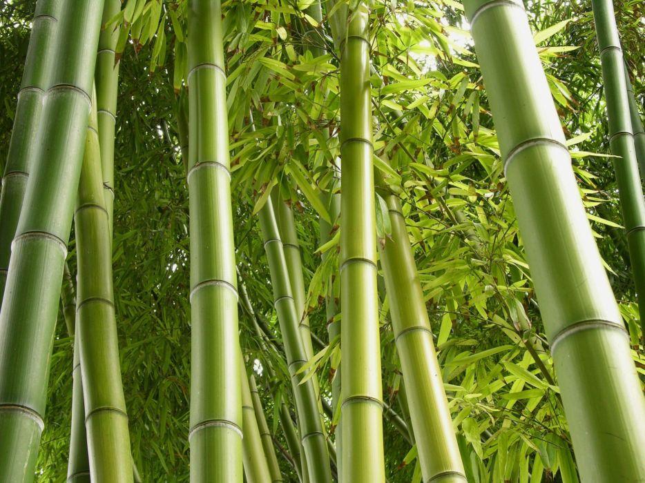 green nature jungle bamboo plants wallpaper