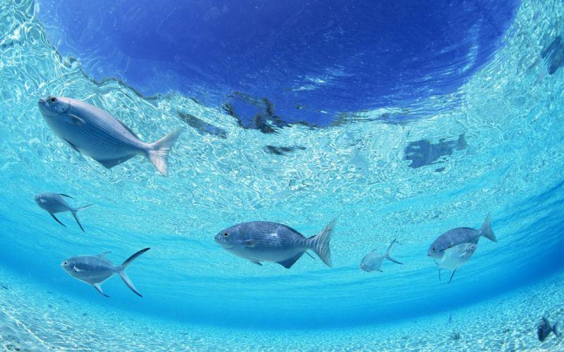 fish underwater wallpaper