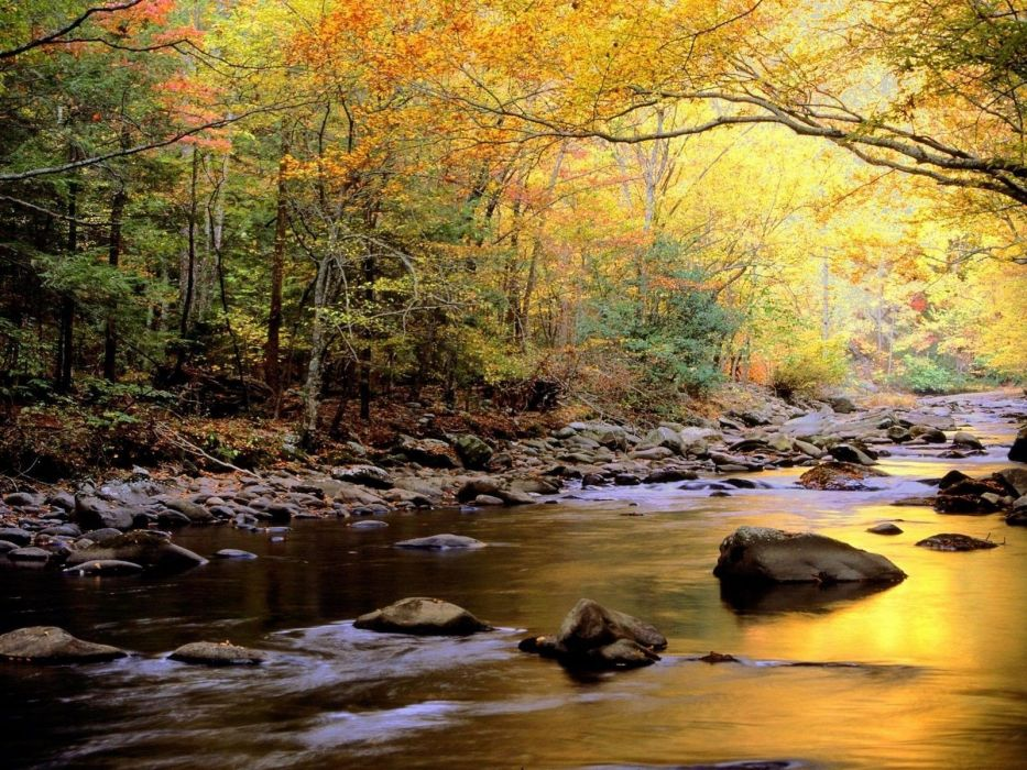 water landscapes nature trees golden Tennessee lakes National Park reflections Great Smoky Mountains wallpaper
