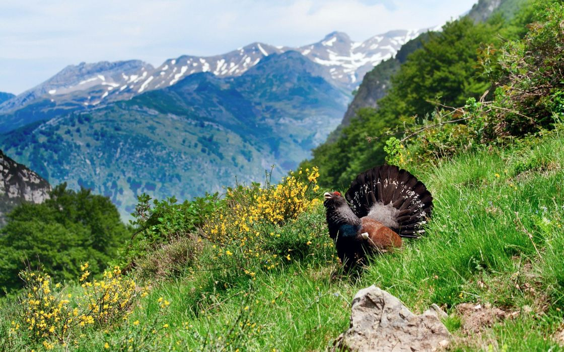 mountains clouds landscapes nature birds Europe Grouse wallpaper