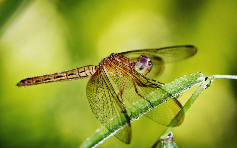 animal nature green dragonfly hd 4k wallpaper wallpaper