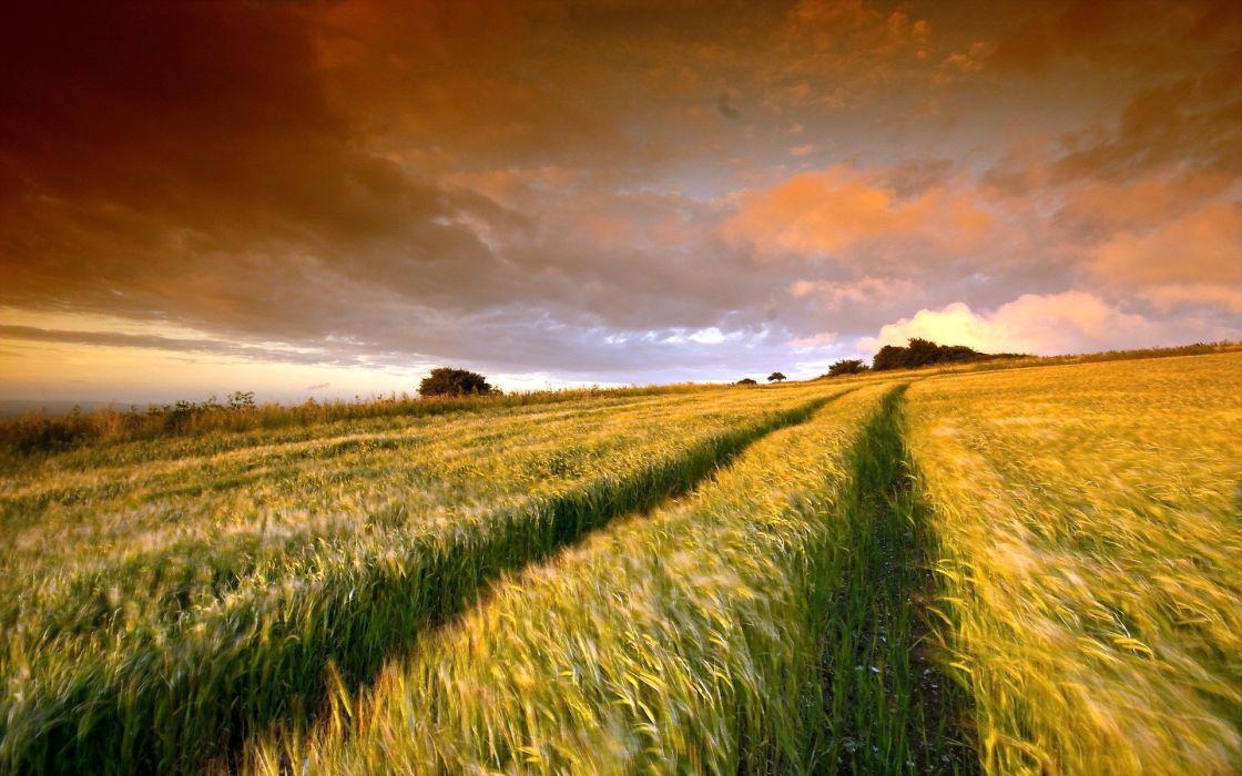 nature landscape field cloud sunset hd ultrahd 4k wallpaper wallpaper