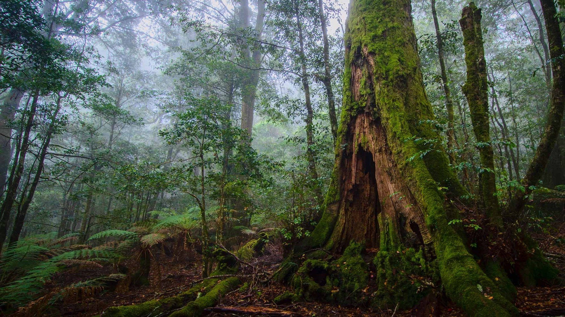 Tree Forest Nature Landscape Rock Hd Ultrahd 4k Wallpaper