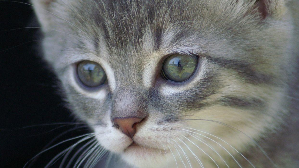 cats animals Cat eye wallpaper