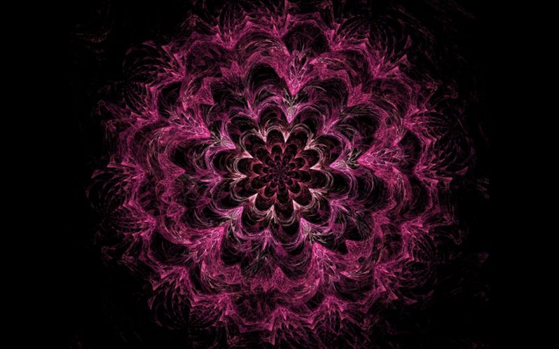 abstract flowers pink fractals wallpaper